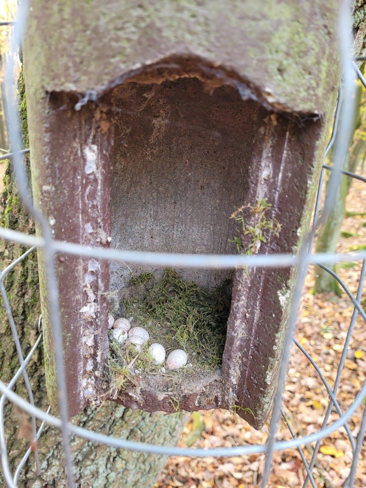 Traurige Vogel-Brutentwicklung in Harbach